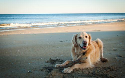 playa_perro-agarrandomaletas