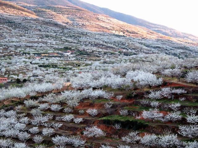valle-del-jerte-_agarrandomaletas