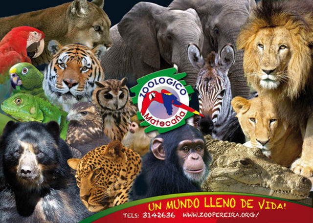 zoologico_matecana_agarrandomaletas